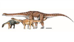 Este es el tamaño de dinosaurio más grande del mundo: imagen
