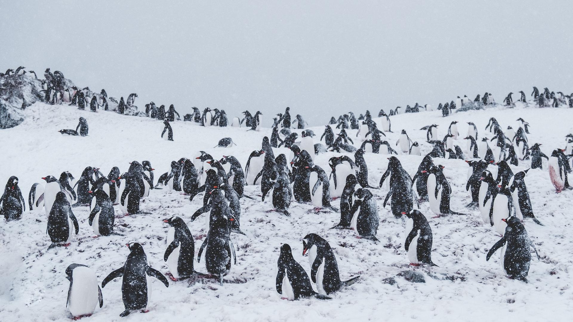 En 2022, parte el primer crucero a la Antártida 100% LGBTIQ+