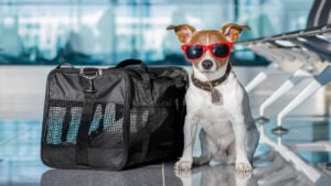 ¿Viajar con mascotas? Desde 2021, ya no será tan fácil volar