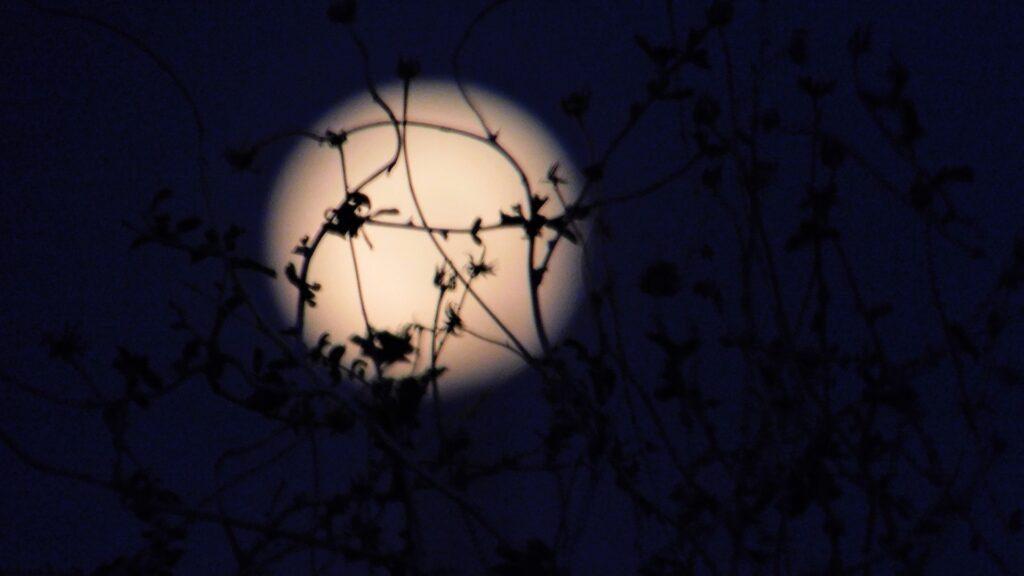 ¿Qué efecto tiene en el sueño de las personas la luna llena?
