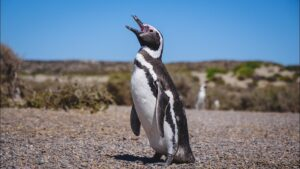 Patagonia argentina: animales para ver en un viaje a Península de Valdés