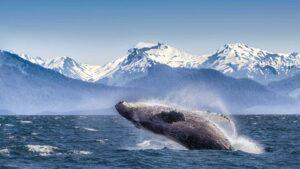 Otro lugar para vacunarse gratis en Estados Unidos: Alaska