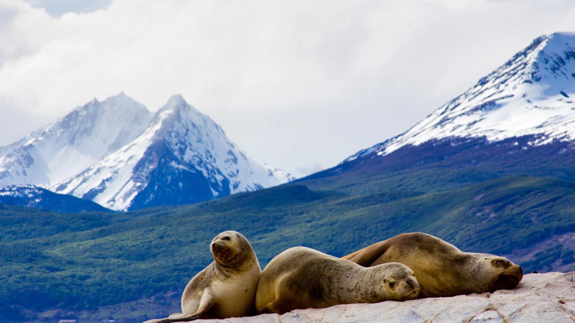 Navegar por el Canal de Beagle, un viaje imperdible en el sur de Argentina