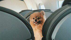 Viajar con mascotas a Estados Unidos: nuevos requisitos y prohibiciones