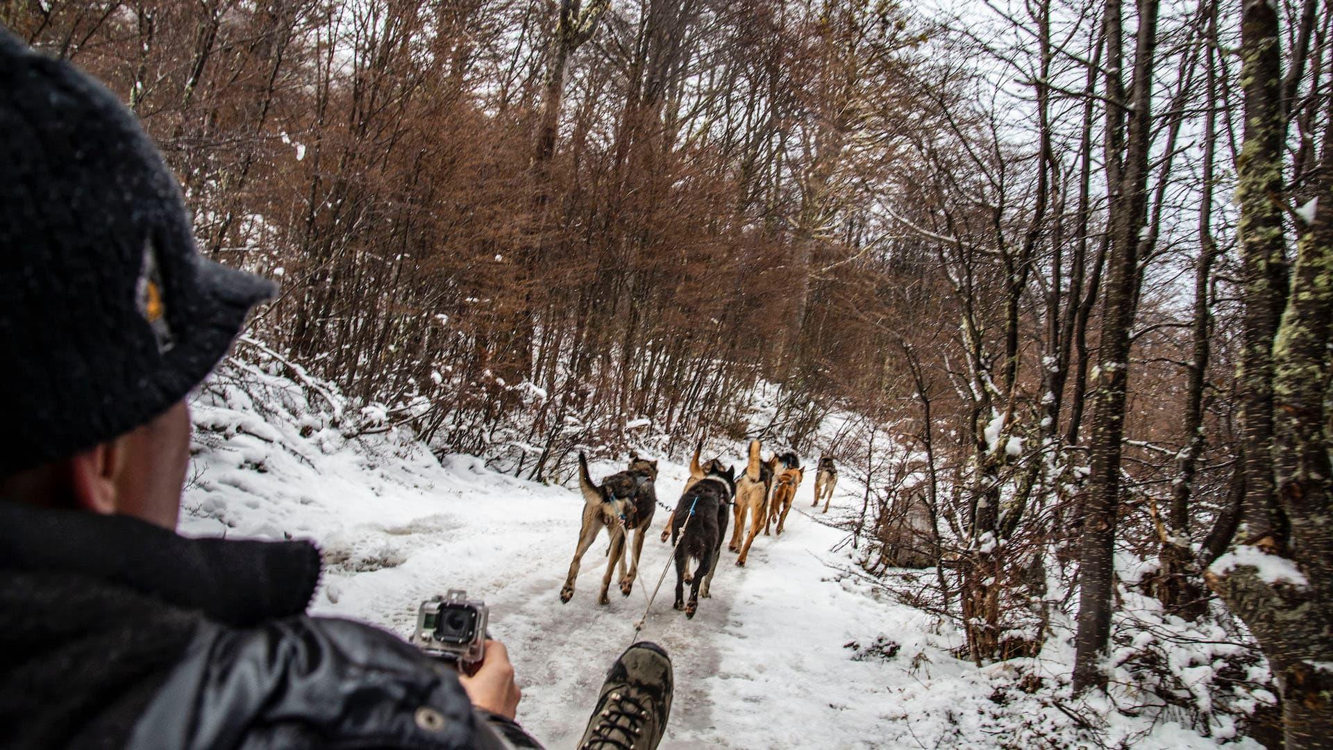 Viajar a Ushuaia: 5 actividades para hacer en la nieve, bosque y el Beagle
