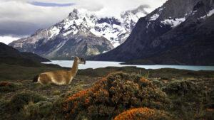 Argentina elimina la cuarentena para los viajeros vacunados