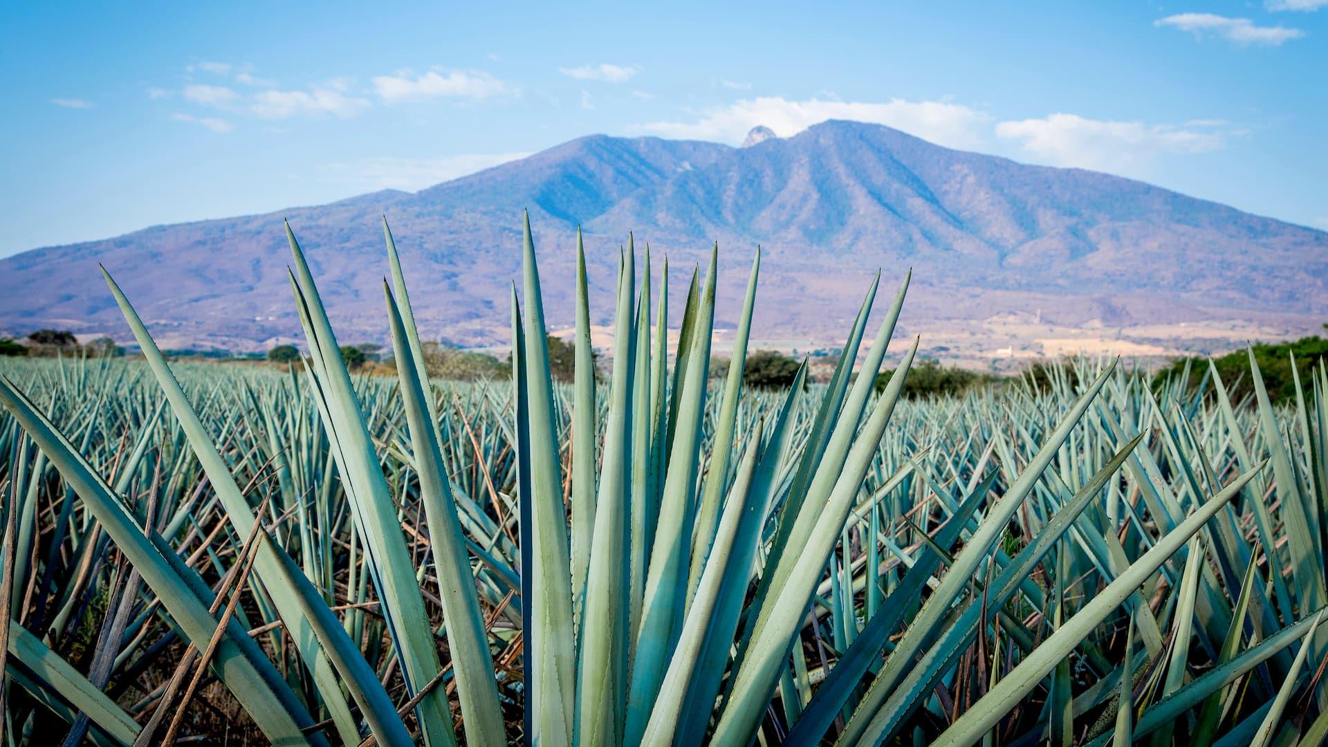 Cinco destinos imperdibles para visitar México en verano