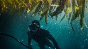 Crearán un circuito de buceo por Argentina en homenaje a las Malvinas